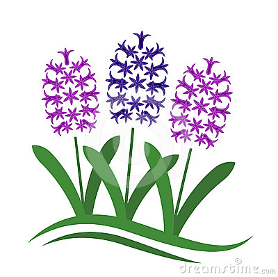 Hyacinth clipart #11, Download drawings