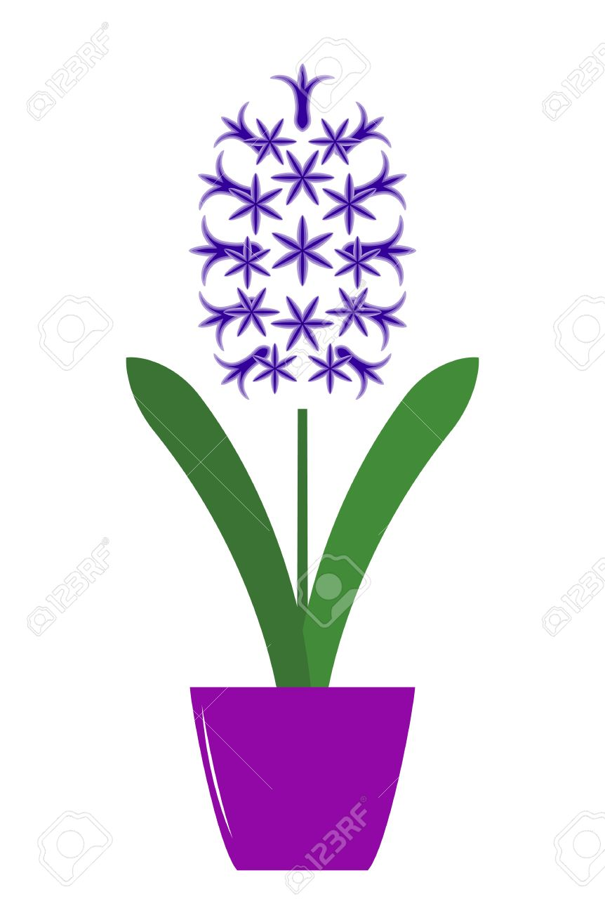 Hyacinth clipart #2, Download drawings