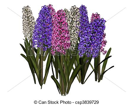 Hyacinth clipart #18, Download drawings