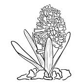 Hyacinth clipart #19, Download drawings