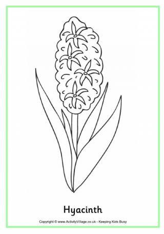 Hyacinth coloring #19, Download drawings