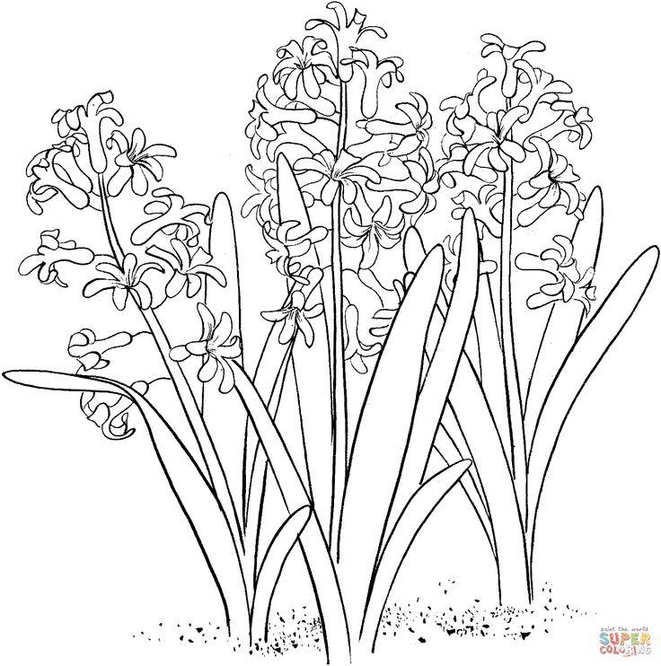 Hyacinth coloring #6, Download drawings