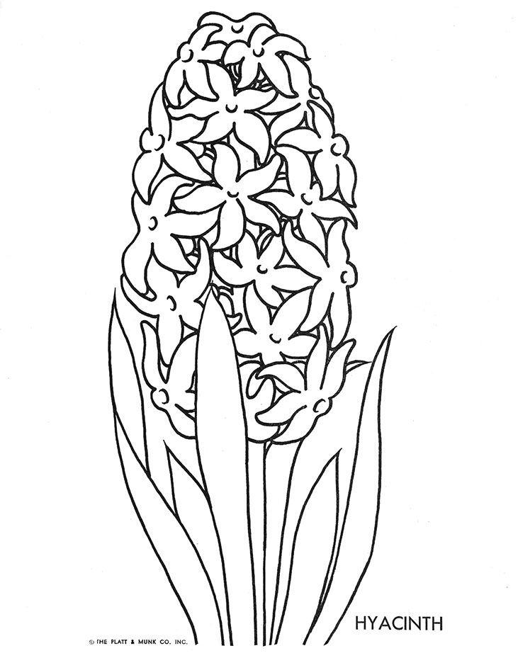 Hyacinth coloring #14, Download drawings