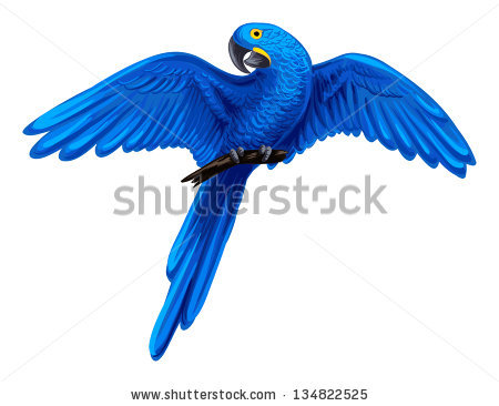 Hyacinth Macaw clipart #20, Download drawings