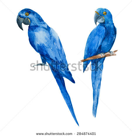 Hyacinth Macaw clipart #7, Download drawings