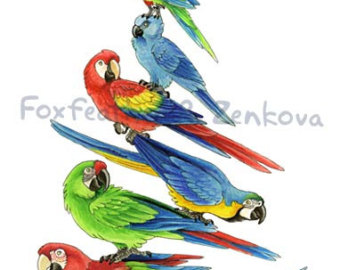 Hyacinth Macaw clipart #15, Download drawings