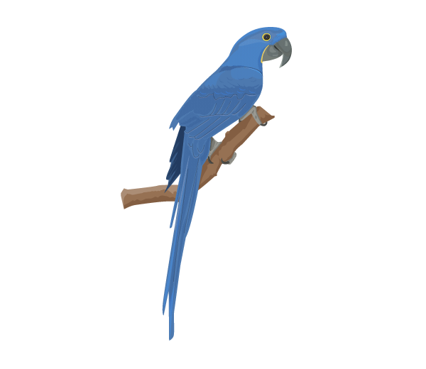 Hyacinth Macaw clipart #4, Download drawings