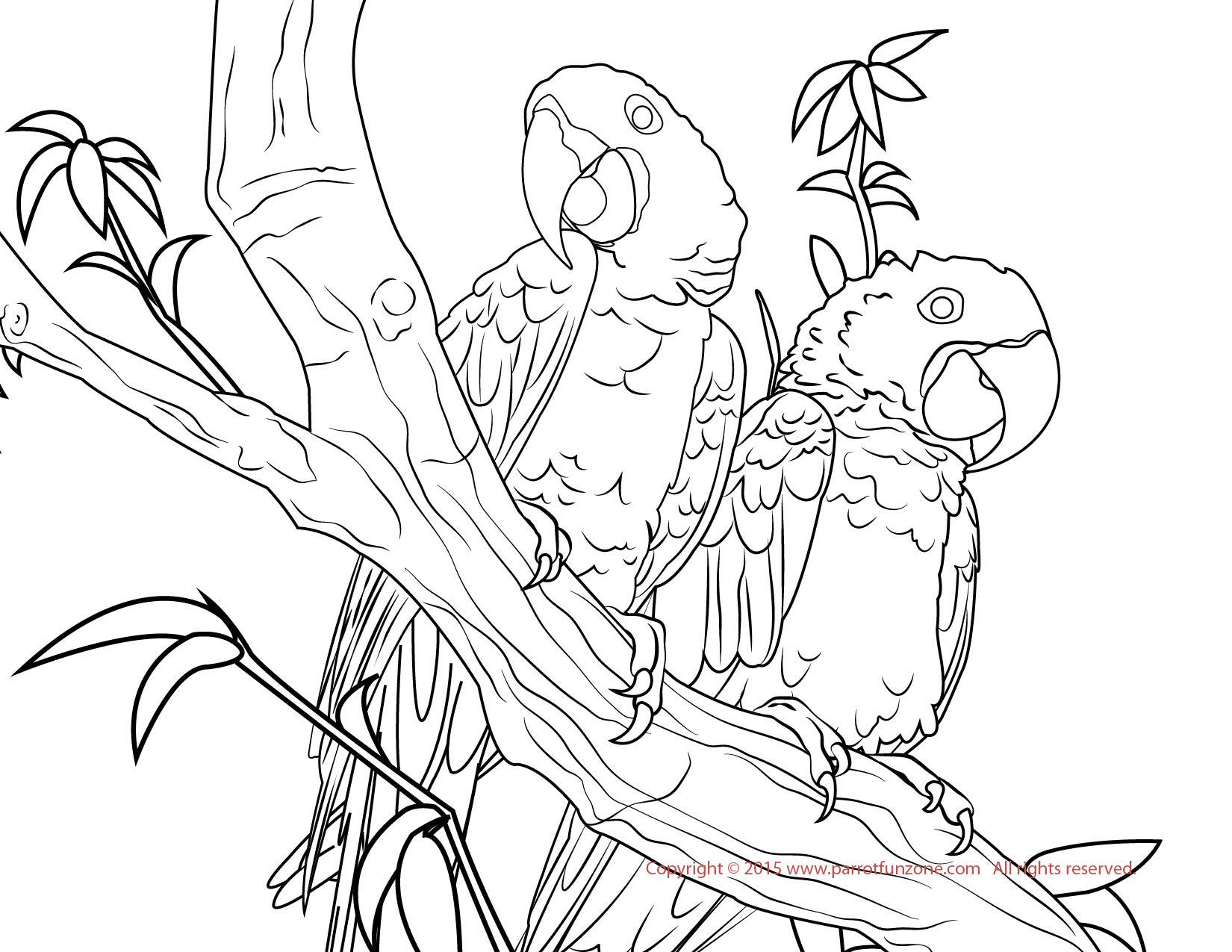 Hyacinth Macaw coloring #20, Download drawings