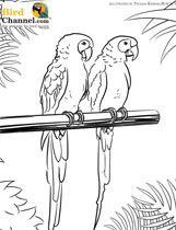 Hyacinth Macaw coloring #11, Download drawings