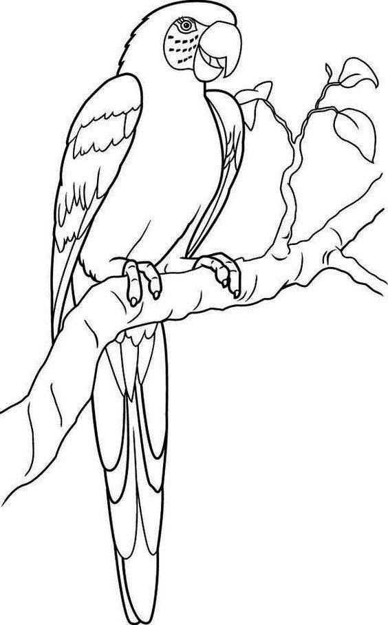 Hyacinth Macaw coloring #10, Download drawings
