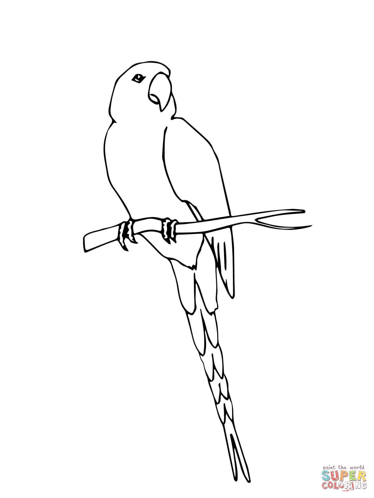 Hyacinth Macaw coloring #4, Download drawings