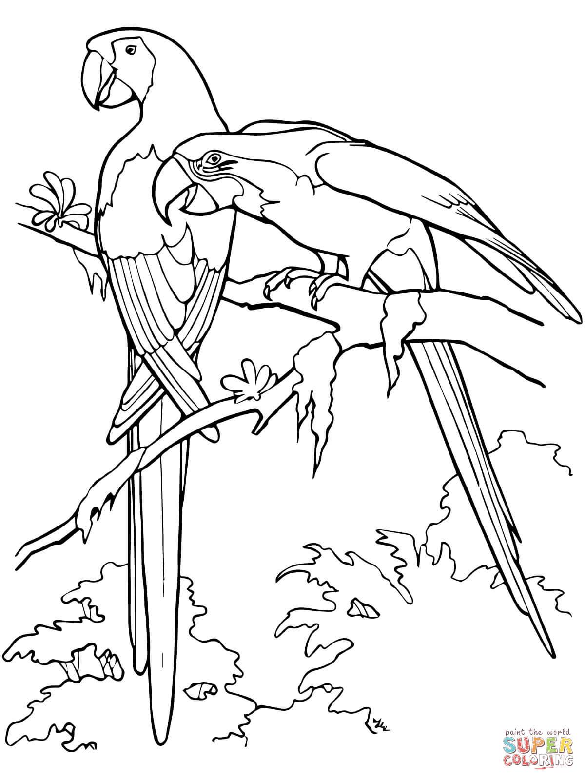 Hyacinth Macaw coloring #3, Download drawings