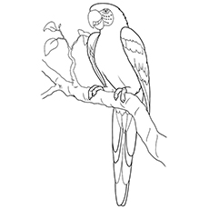 Hyacinth Macaw coloring #7, Download drawings