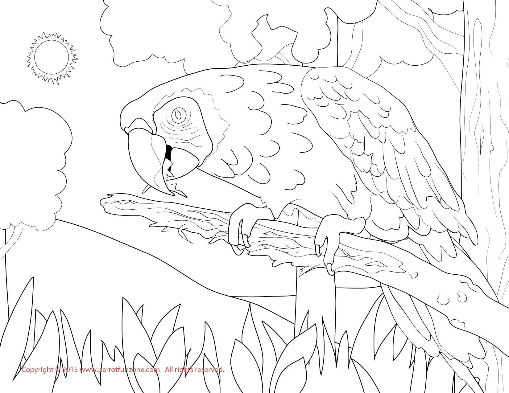 Hyacinth Macaw coloring #6, Download drawings