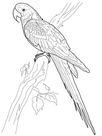 Hyacinth Macaw coloring #18, Download drawings