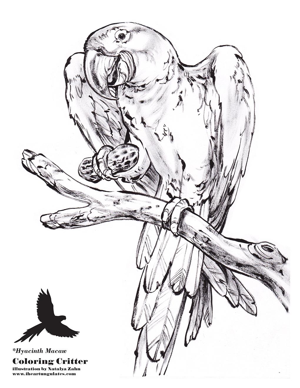 Hyacinth Macaw coloring #9, Download drawings