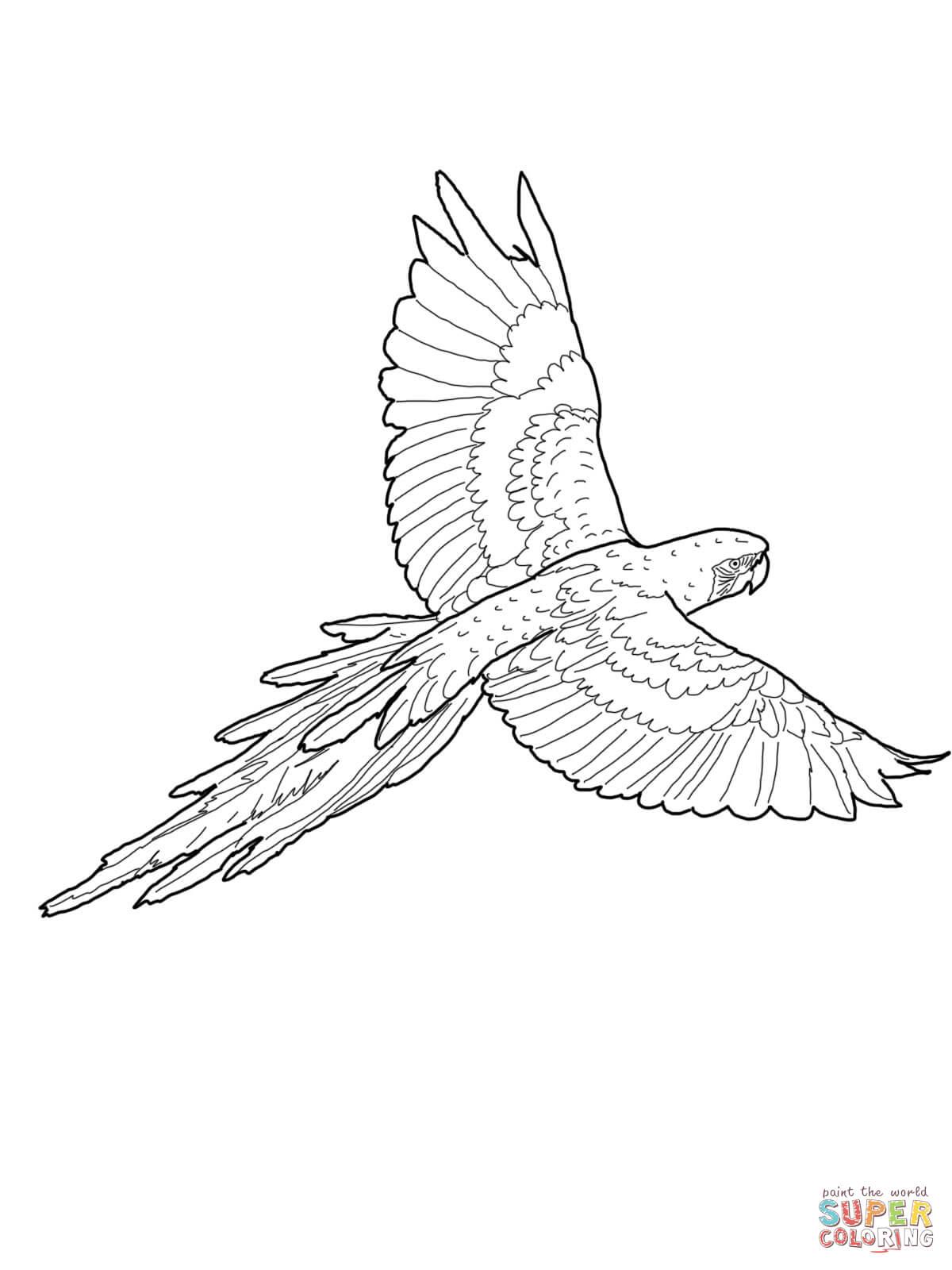 Hyacinth Macaw coloring #17, Download drawings