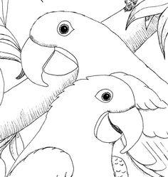 Hyacinth Macaw coloring #16, Download drawings
