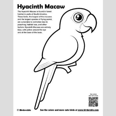 Hyacinth Macaw coloring #19, Download drawings