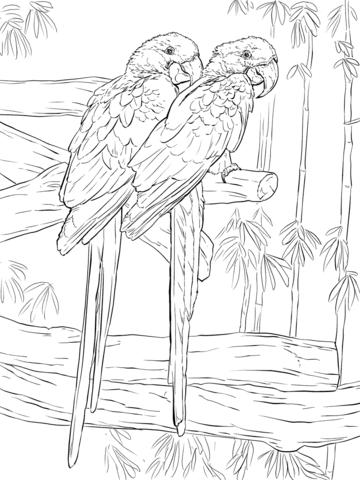 Hyacinth Macaw coloring #8, Download drawings