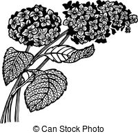 Hydrangea clipart #15, Download drawings
