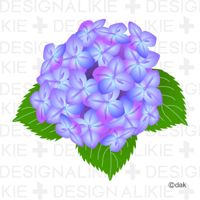 Hydrangea clipart #16, Download drawings