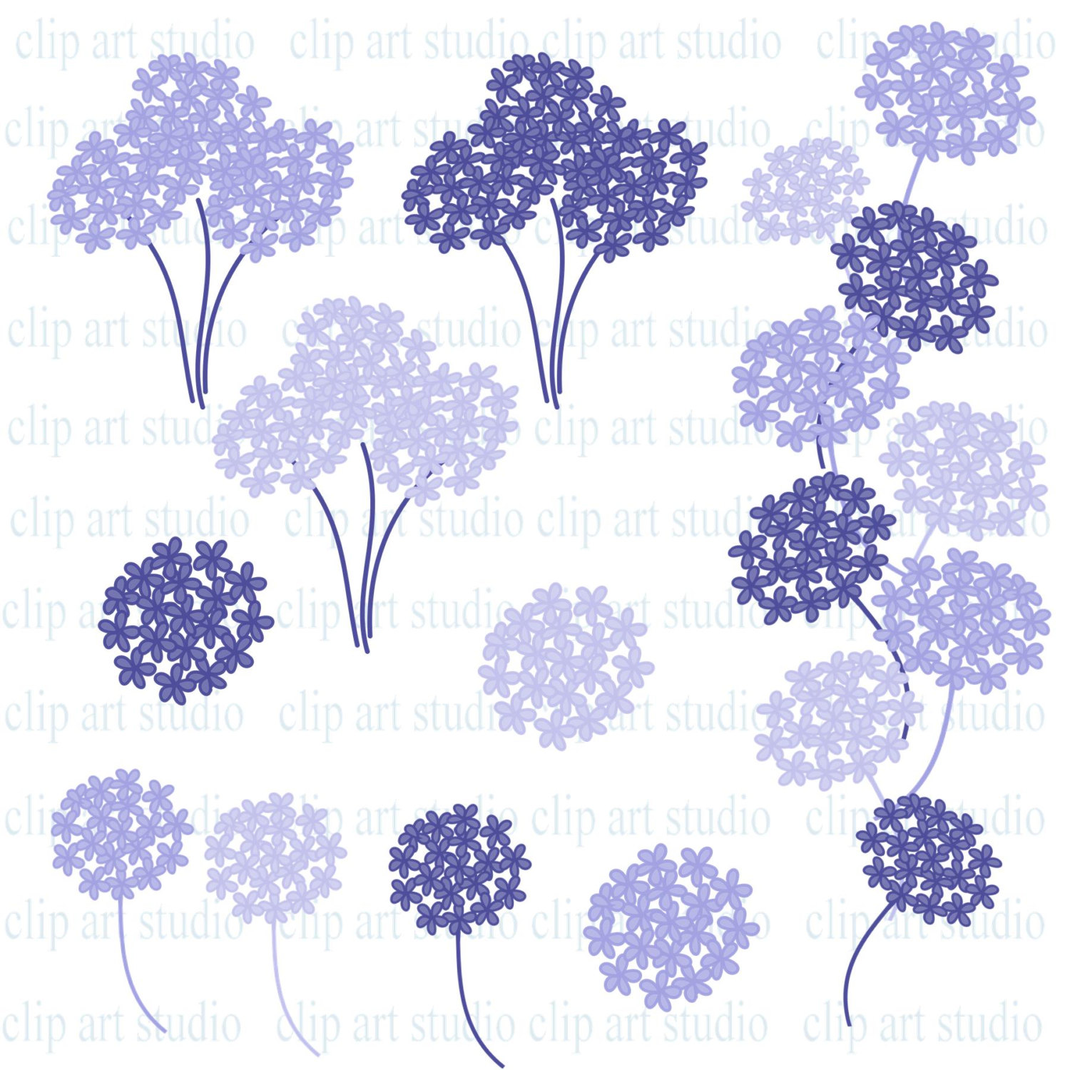 Hydrangea clipart #17, Download drawings