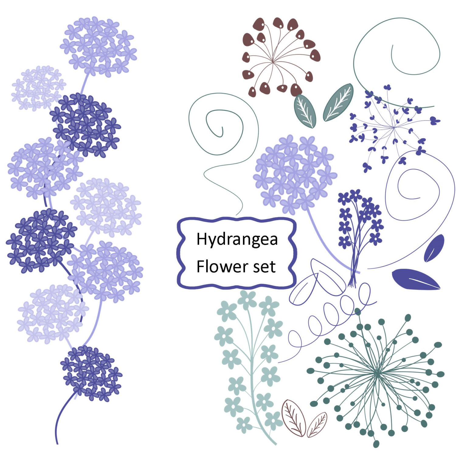 Hydrangea clipart #4, Download drawings