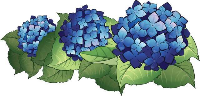 Hydrangea clipart #3, Download drawings