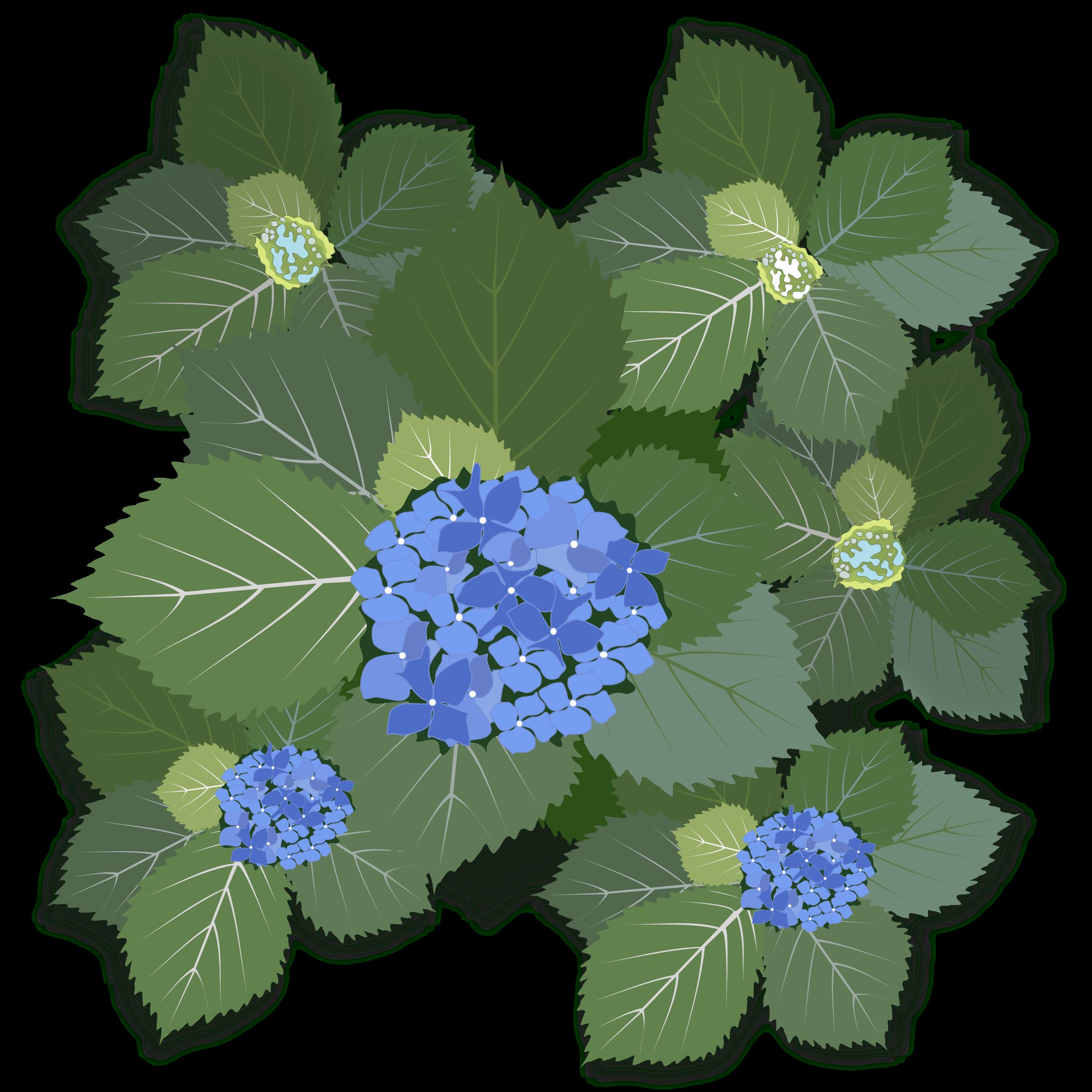 Hydrangea svg #5, Download drawings
