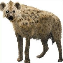 Hyena clipart #15, Download drawings