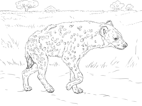 Hyena coloring #13, Download drawings