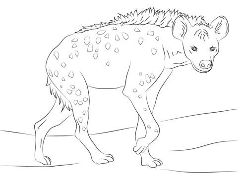 Hyena coloring #4, Download drawings