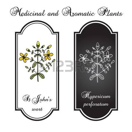 Hypericum clipart #3, Download drawings
