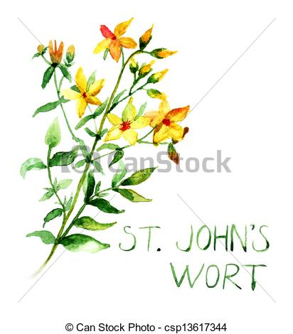 Hypericum clipart #19, Download drawings