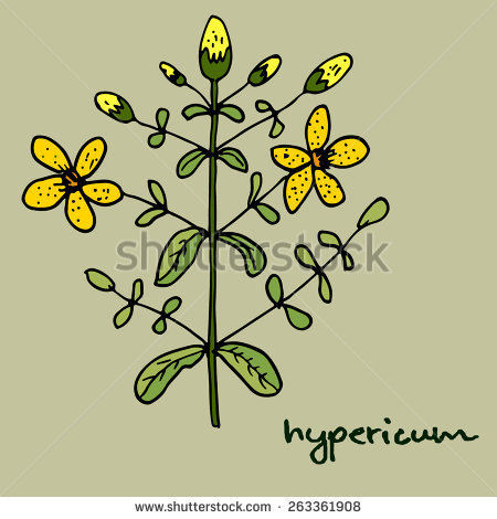 Hypericum clipart #17, Download drawings