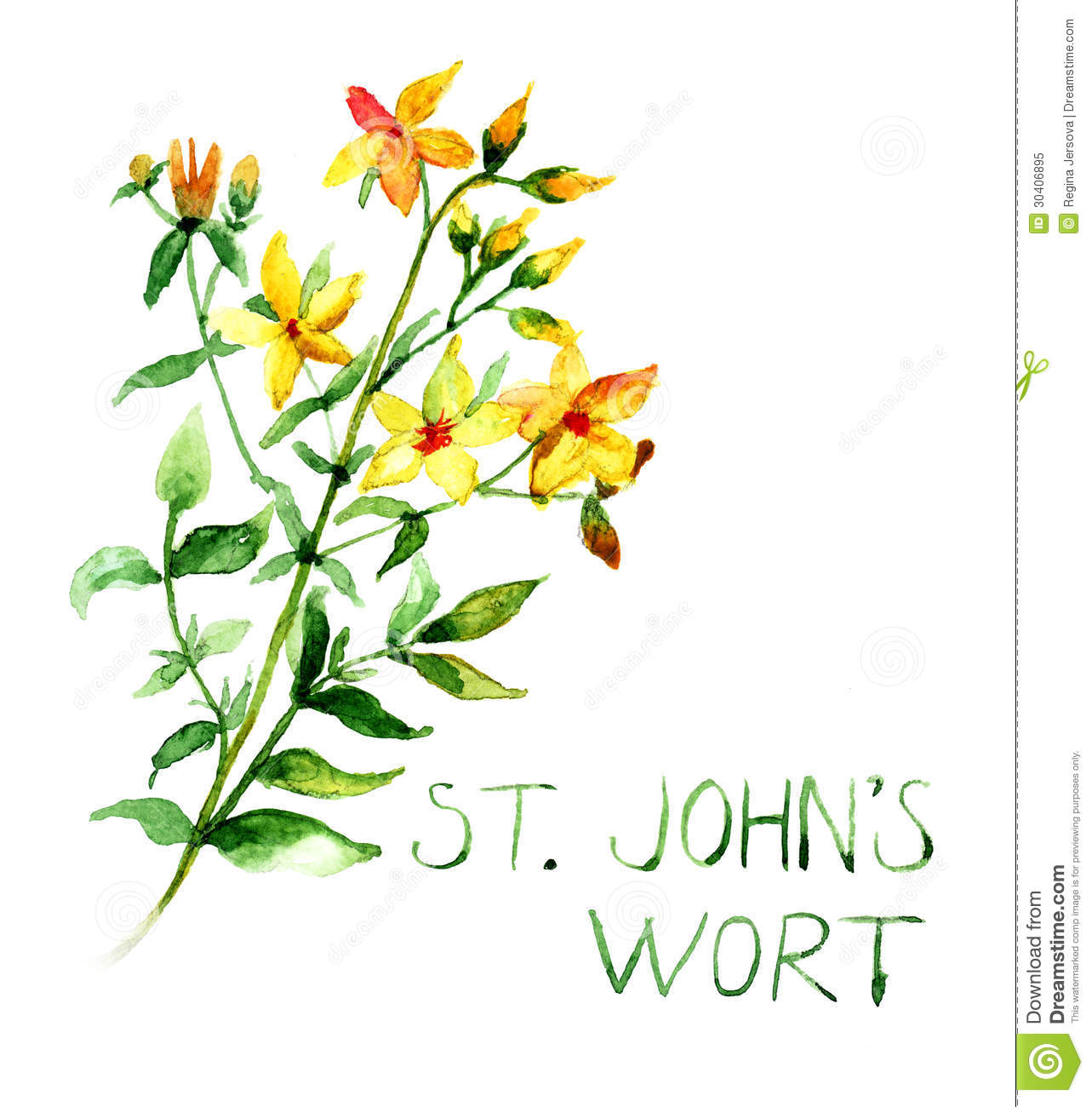 Hypericum clipart #16, Download drawings