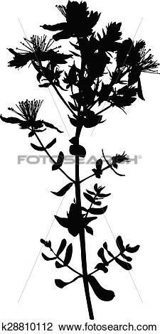 Hypericum clipart #14, Download drawings