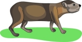 Hyrax clipart #3, Download drawings