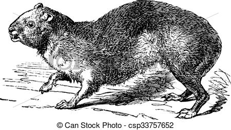 Rock Hyrax clipart #11, Download drawings