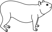 Hyrax clipart #2, Download drawings