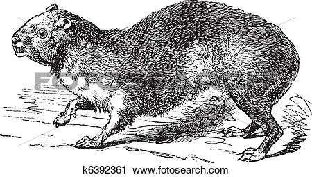Rock Hyrax clipart #12, Download drawings