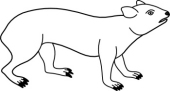 Hyrax clipart #13, Download drawings
