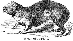 Hyrax clipart #10, Download drawings