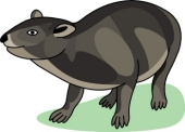 Rock Hyrax clipart #16, Download drawings