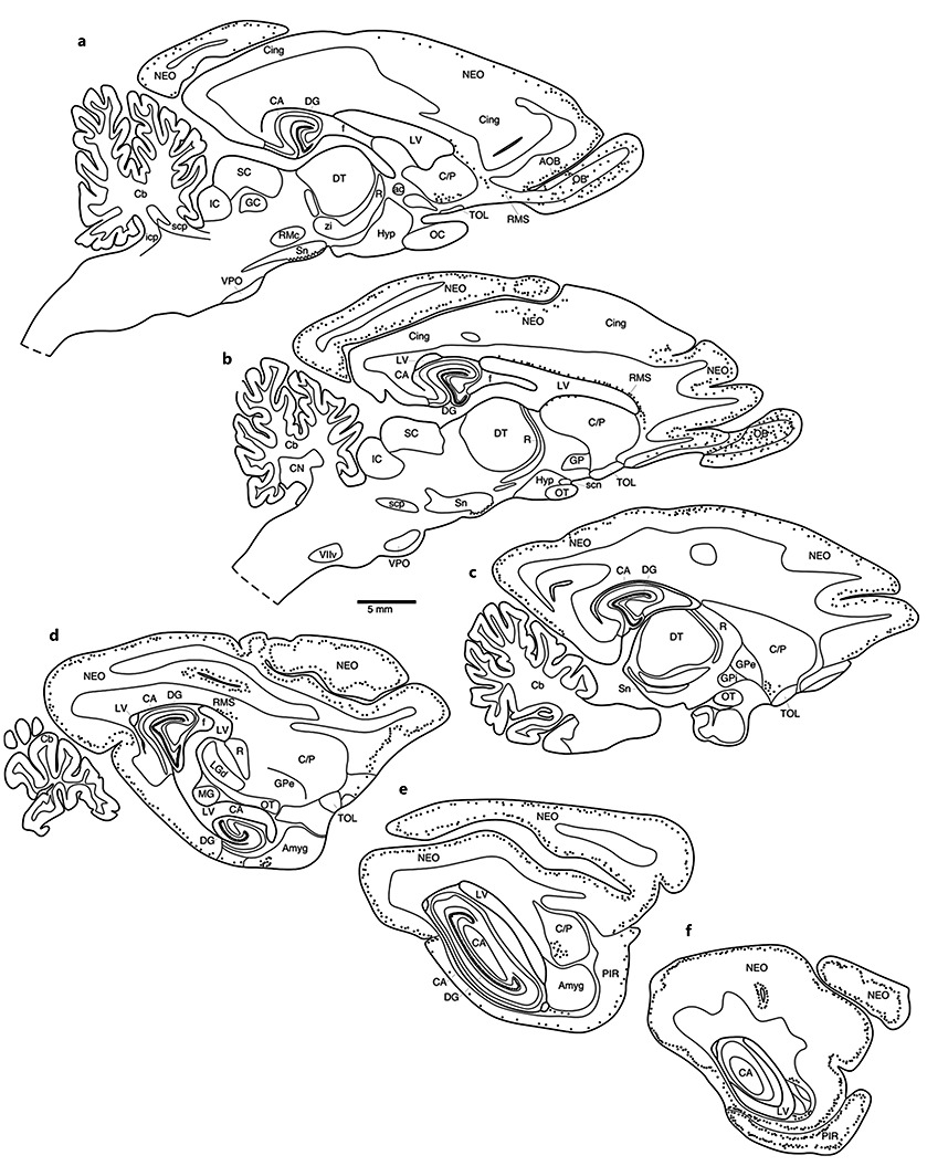 Rock Hyrax coloring #15, Download drawings