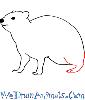 Hyrax coloring #20, Download drawings