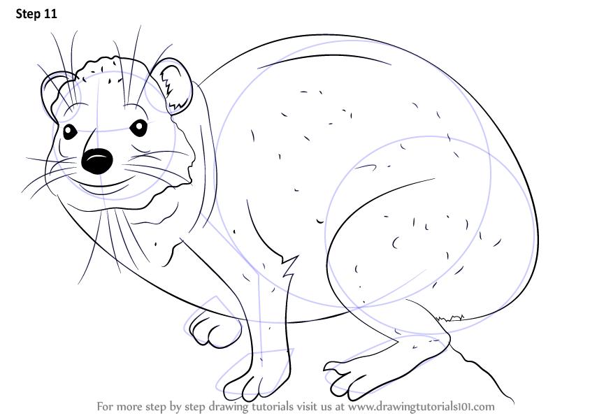 Rock Hyrax coloring #2, Download drawings