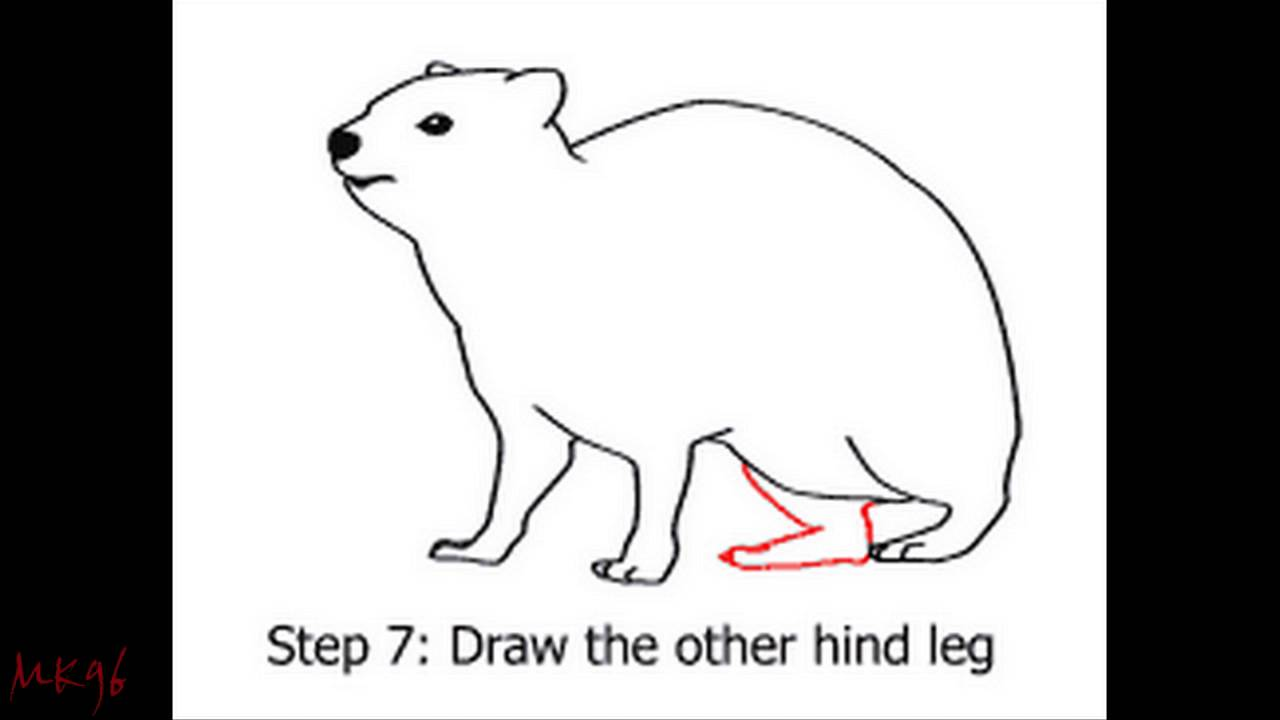 Rock Hyrax coloring #6, Download drawings