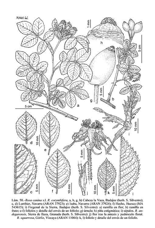 Iberian Peninsula coloring #16, Download drawings